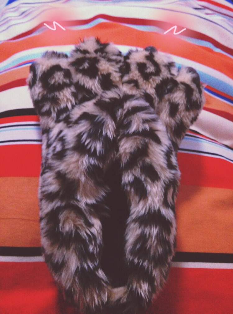 胖嘟嘟的熊掌又暖和又可爱 冬日怎么可以少了它呢