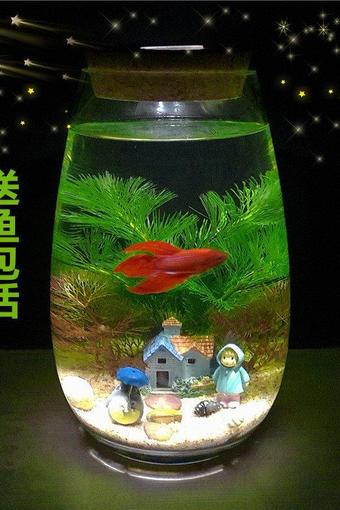 创意桌面diy斗鱼鱼缸 水族箱