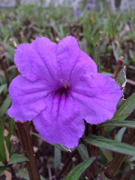 紫色蘑菇房子图片大全图片