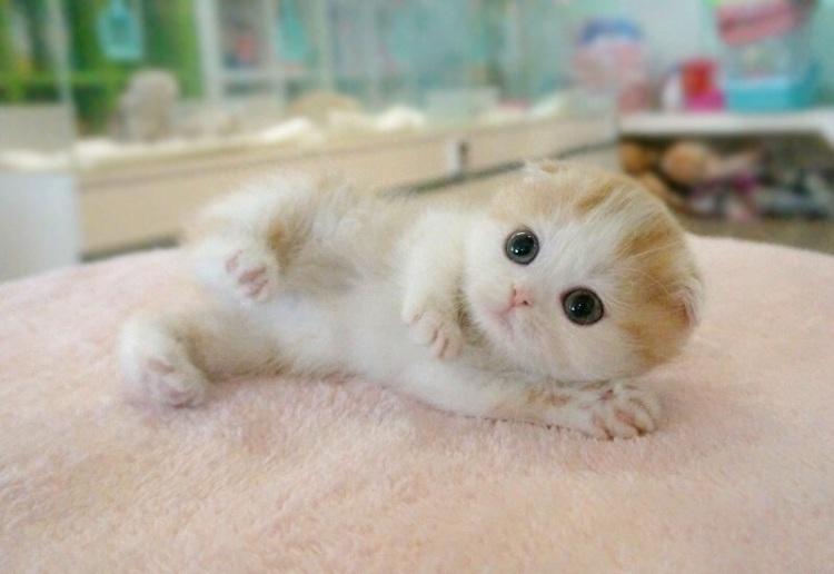 非常可爱的小猫咪