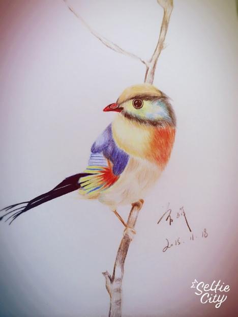 彩铅纯手绘