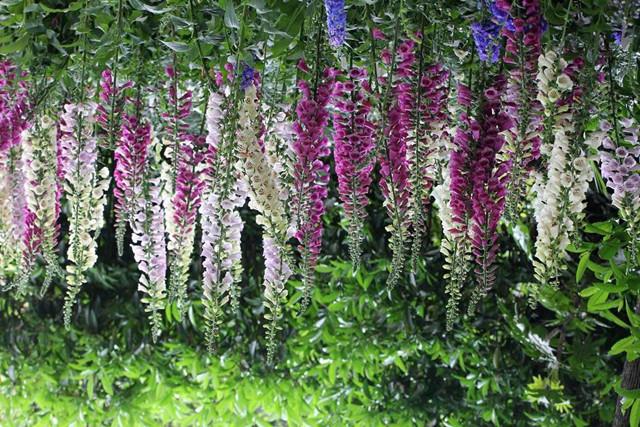 紫藤 紫藤种子 花盆 花土 紫藤花 绿植盆栽 花卉种子